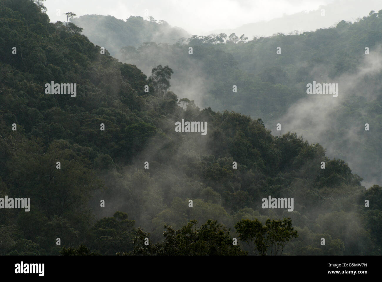 misty-cloud-forest-and-mountains-near-ma