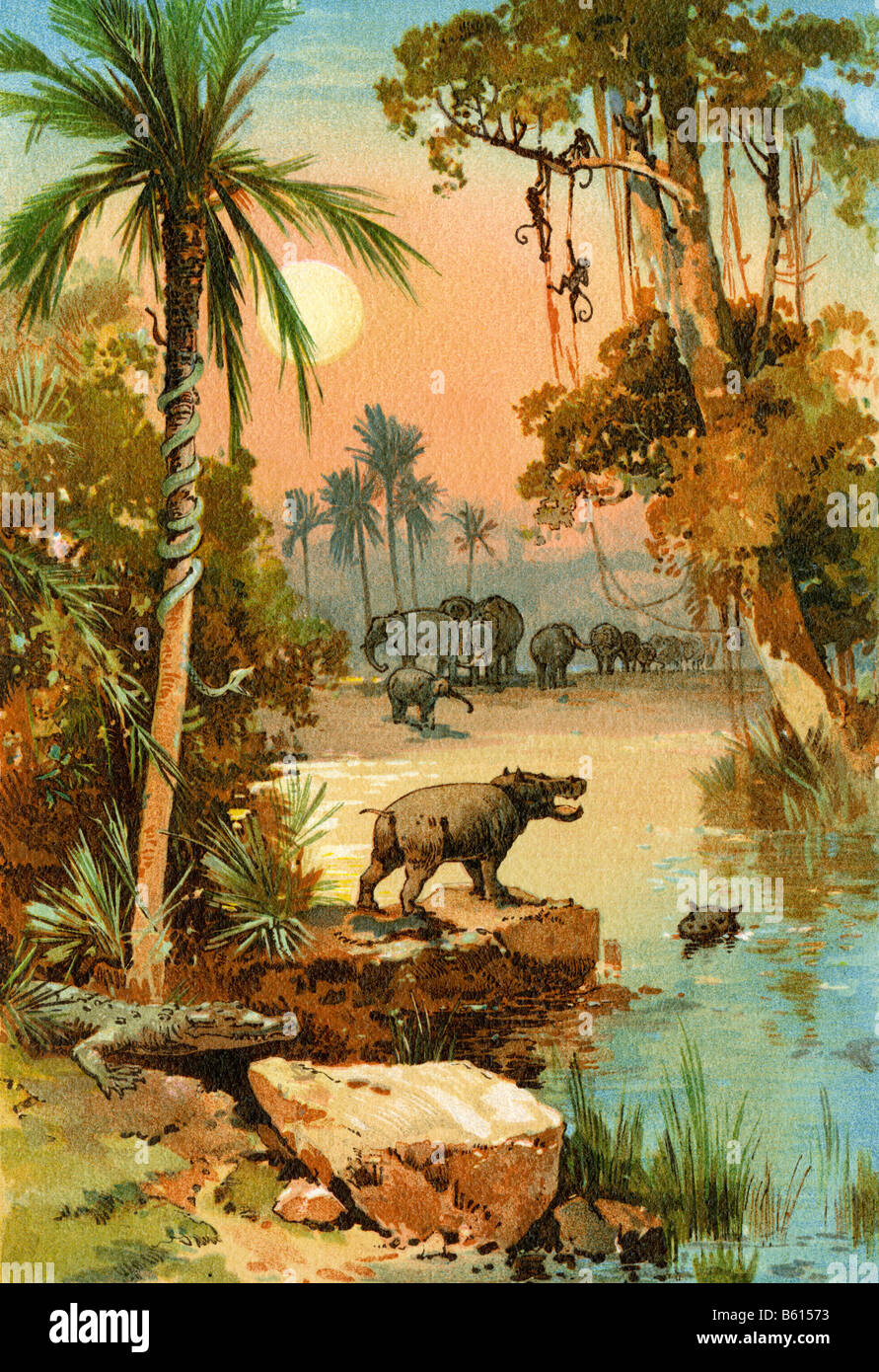 Elephants and hippopotamus along the Congo River Stock Photo
