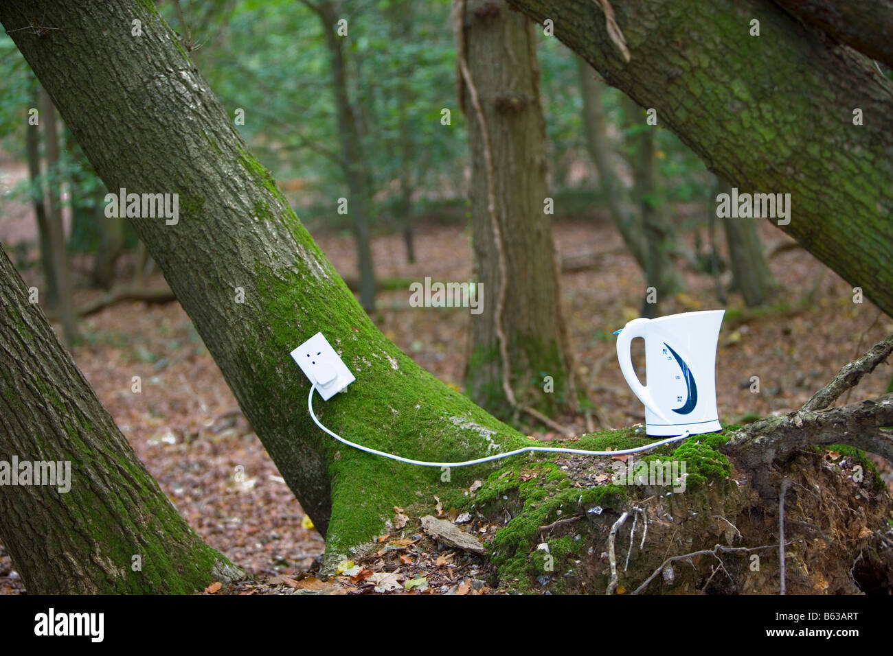 Electrical outlet and kettle on tree in forest - Stock Image