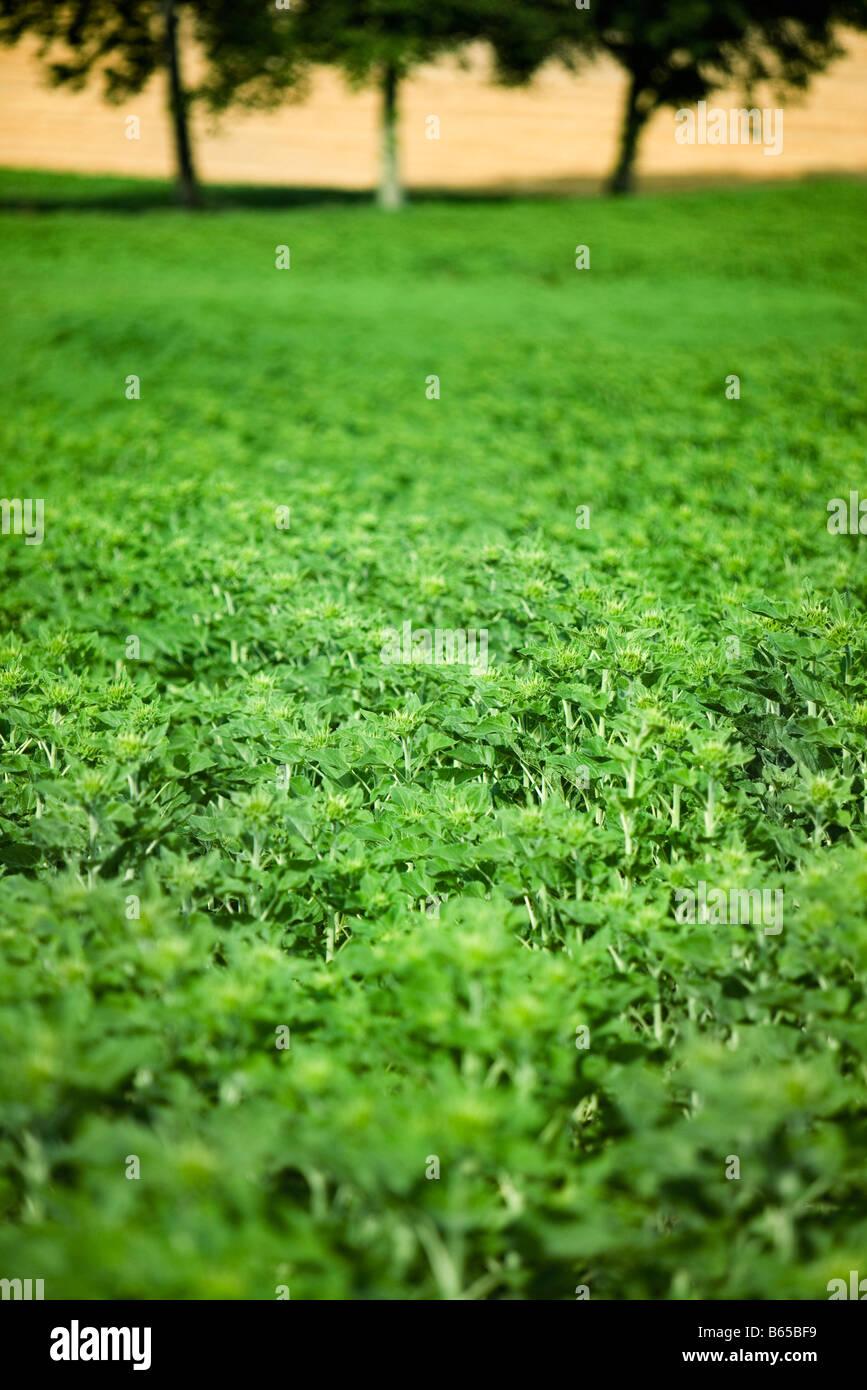 Lush vegetation, close-up - Stock Image