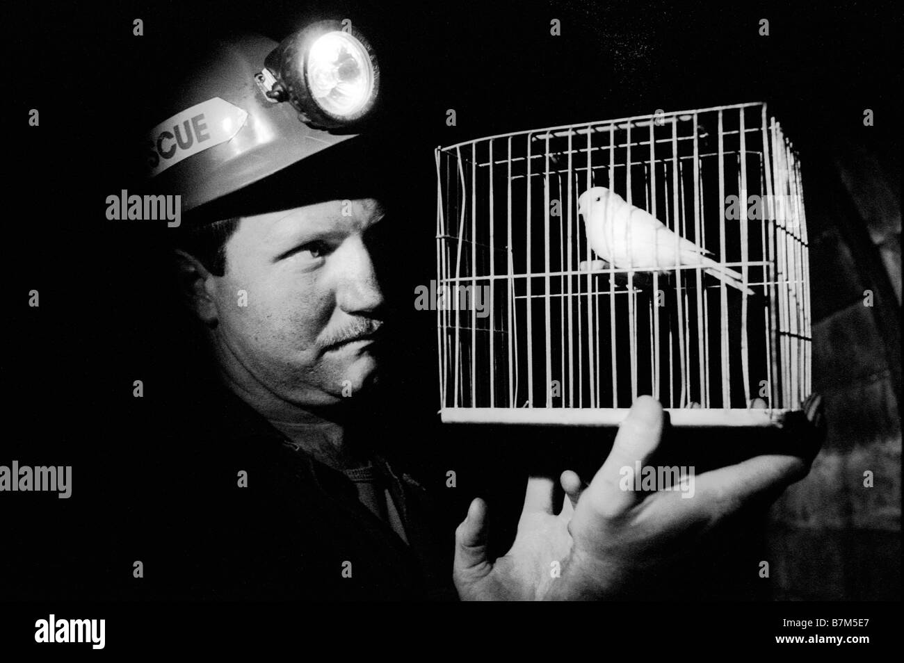 team-member-with-canary-in-cage-at-dinas-mines-rescue-station-rhondda-B7M5E7.jpg