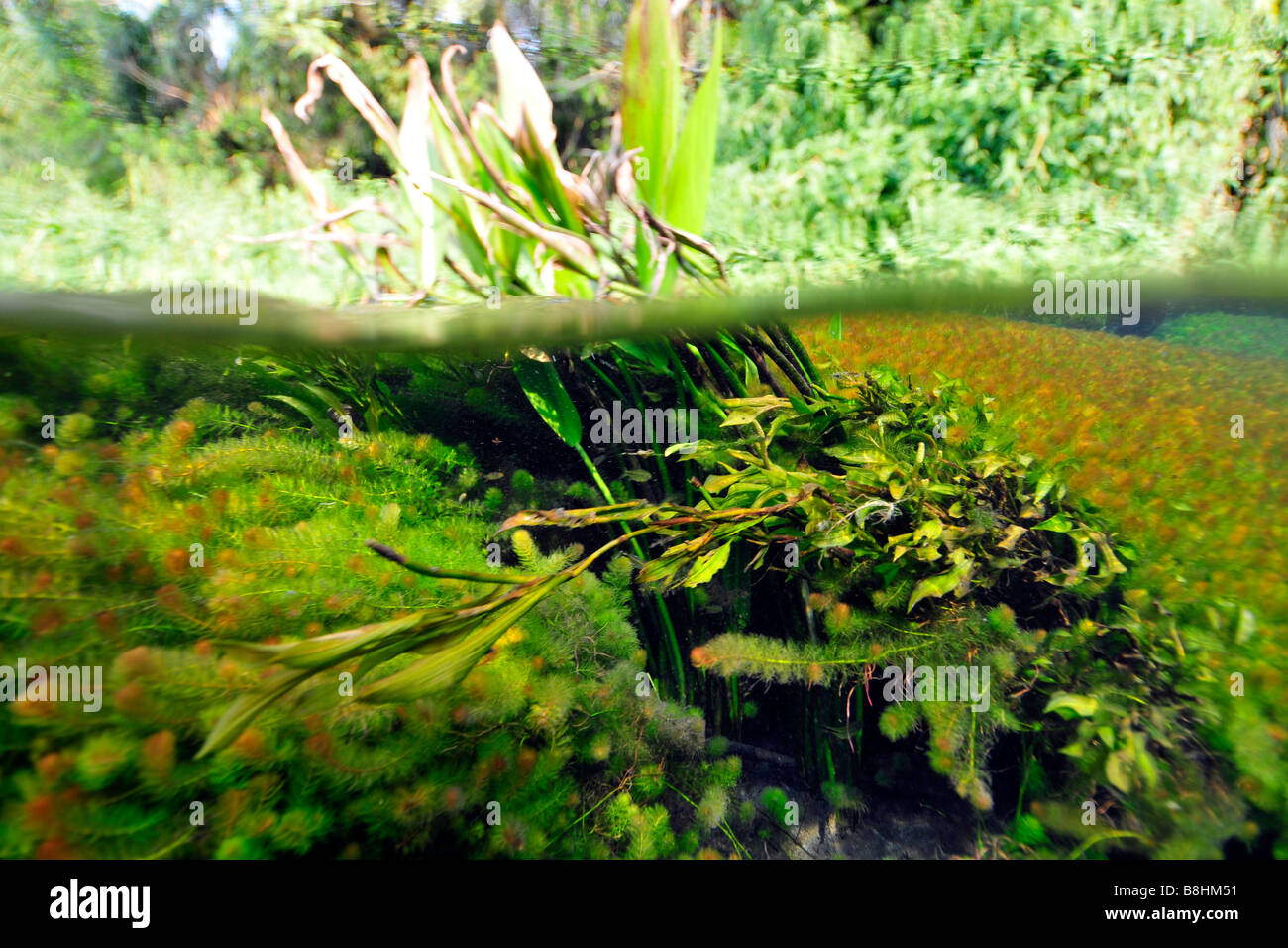 Split image of the lush vegetation above and bellow water, Sucuri river,  Bonito, Mato Grosso do Sul, Brazil - Stock Image