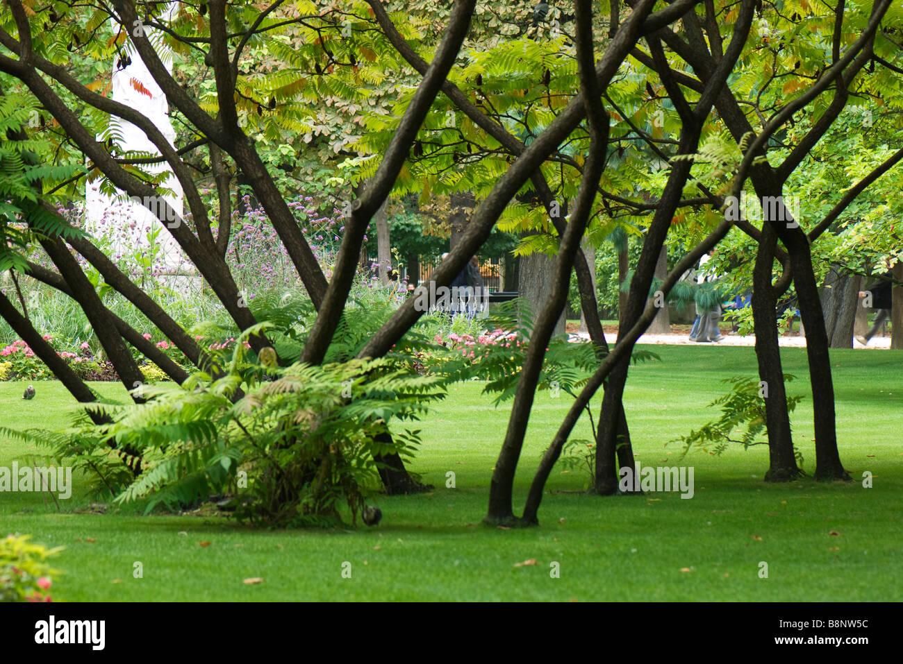 France, Paris, tree grove in Jardin du Luxembourg - Stock Image