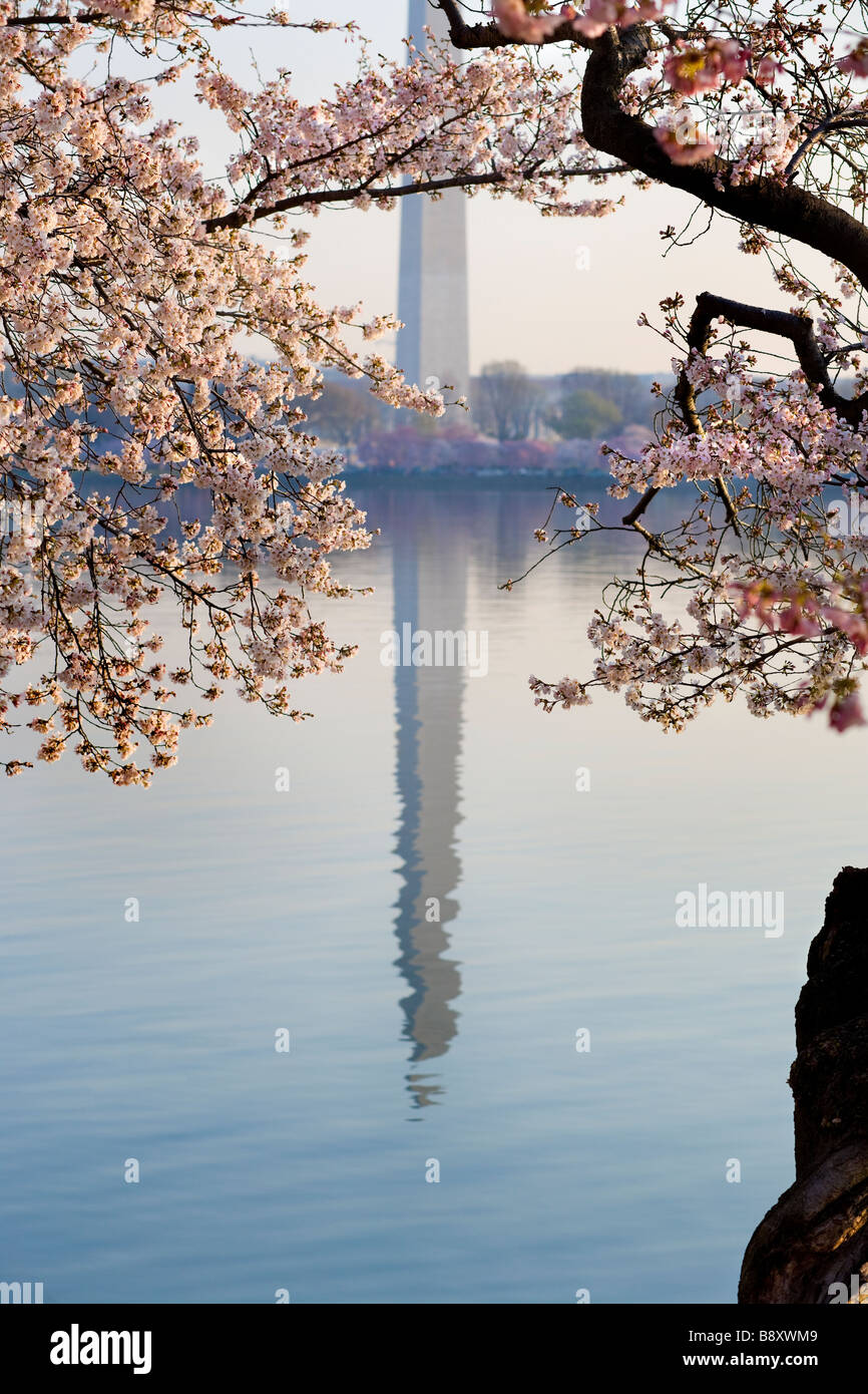 https://c7.alamy.com/comp/B8XWM9/washington-dc-washington-monument-reflecting-in-the-water-of-the-tidal-B8XWM9.jpg