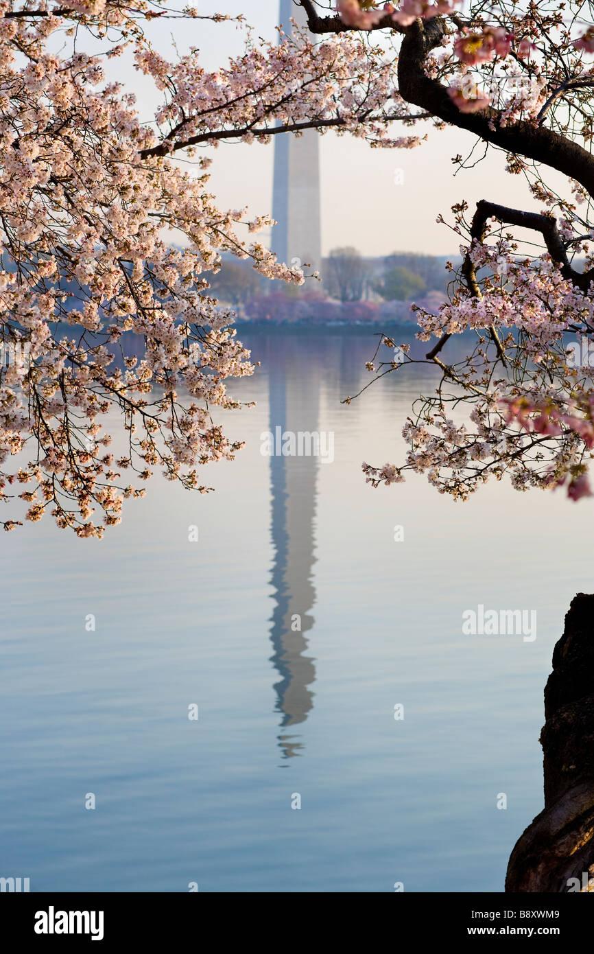 https://c7.alamy.com/comp/B8XWM9/washington-dc-washington-monument-reflecting-in-the-water-of-the-tidal-B8XWM9.jpg