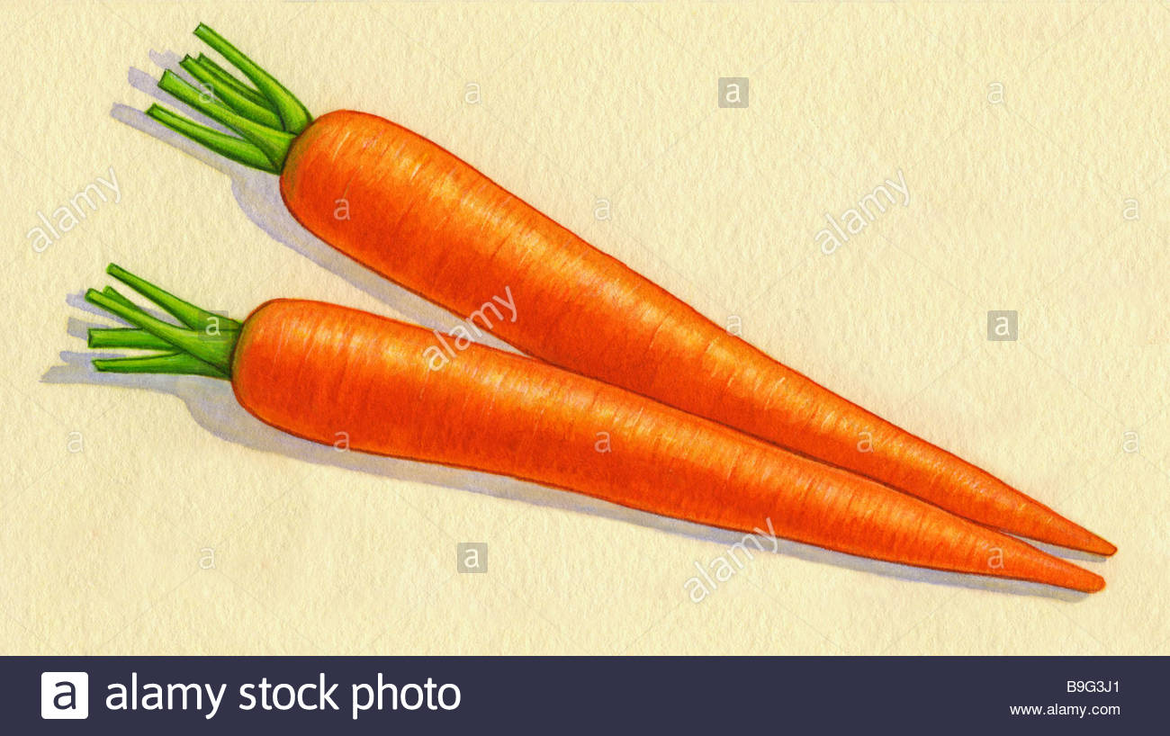 Carrots in Watercolor Stock Photo