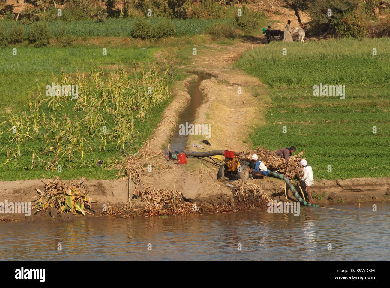 egypt-nile-river-an-irrigation-system-pumps-water-from-the-nile-to-B9WDKM.jpg