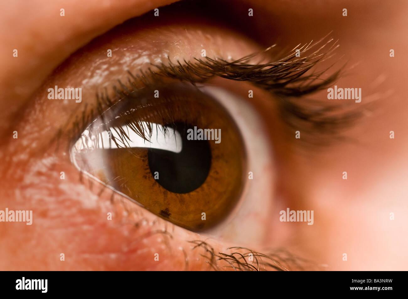 eye eyelashes - Stock Image