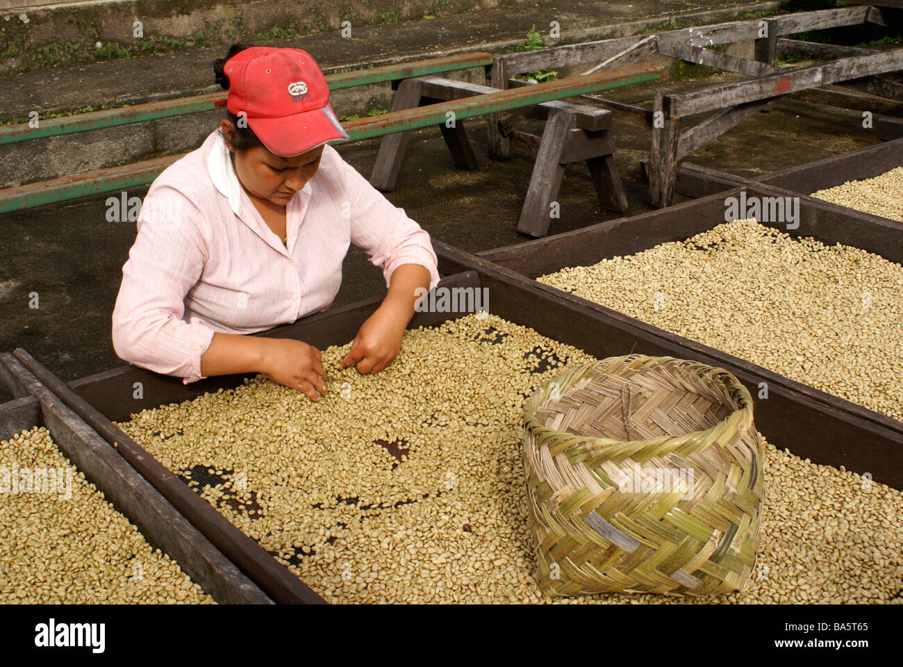 female-worker-sorting-coffee-beans-at-th