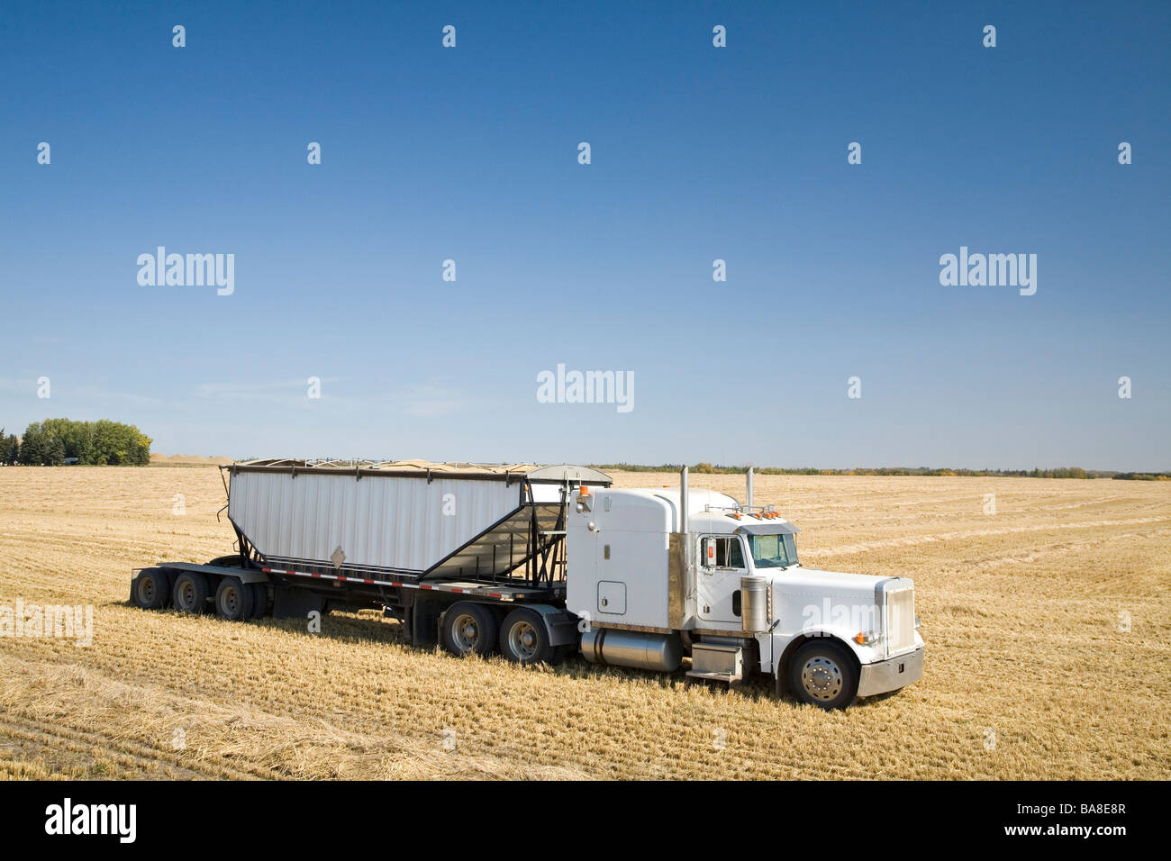 Truck carrying grains in field - Stock Image