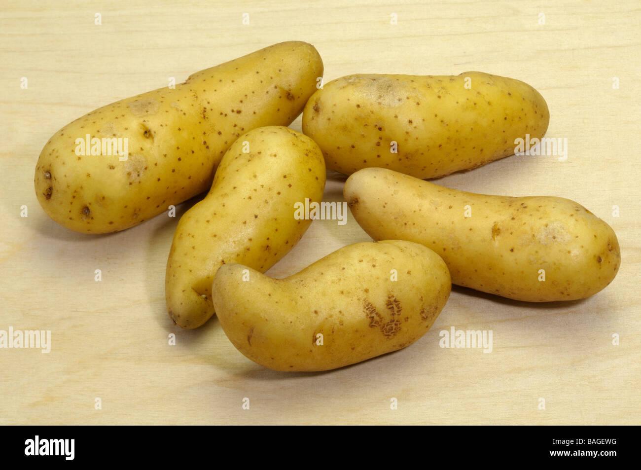 Potato (Solanum tuberosum), variety: La Ratte d Ardeche, studio picture - Stock Image
