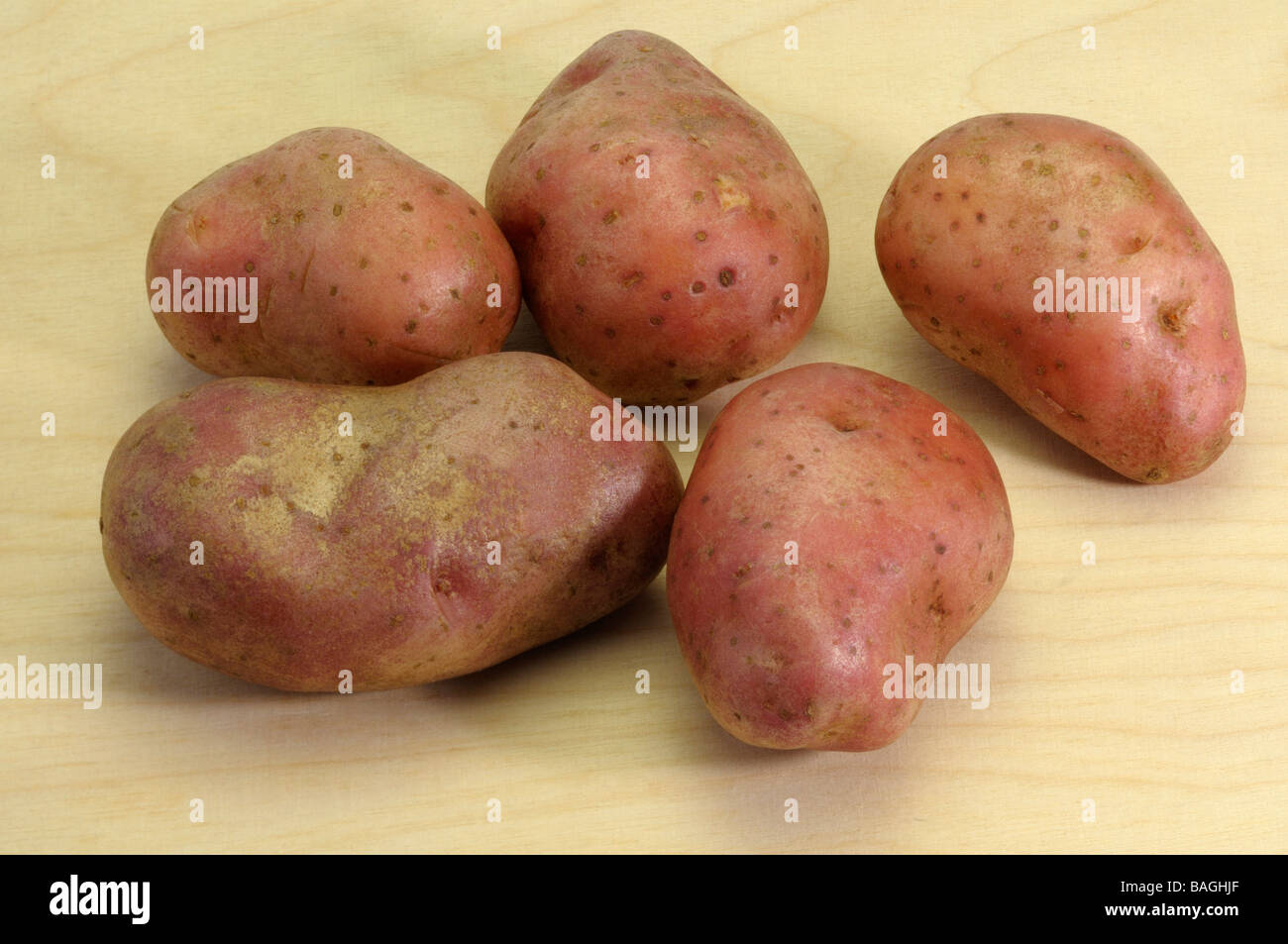 Potato (Solanum tuberosum), variety: Cherie, studio picture - Stock Image