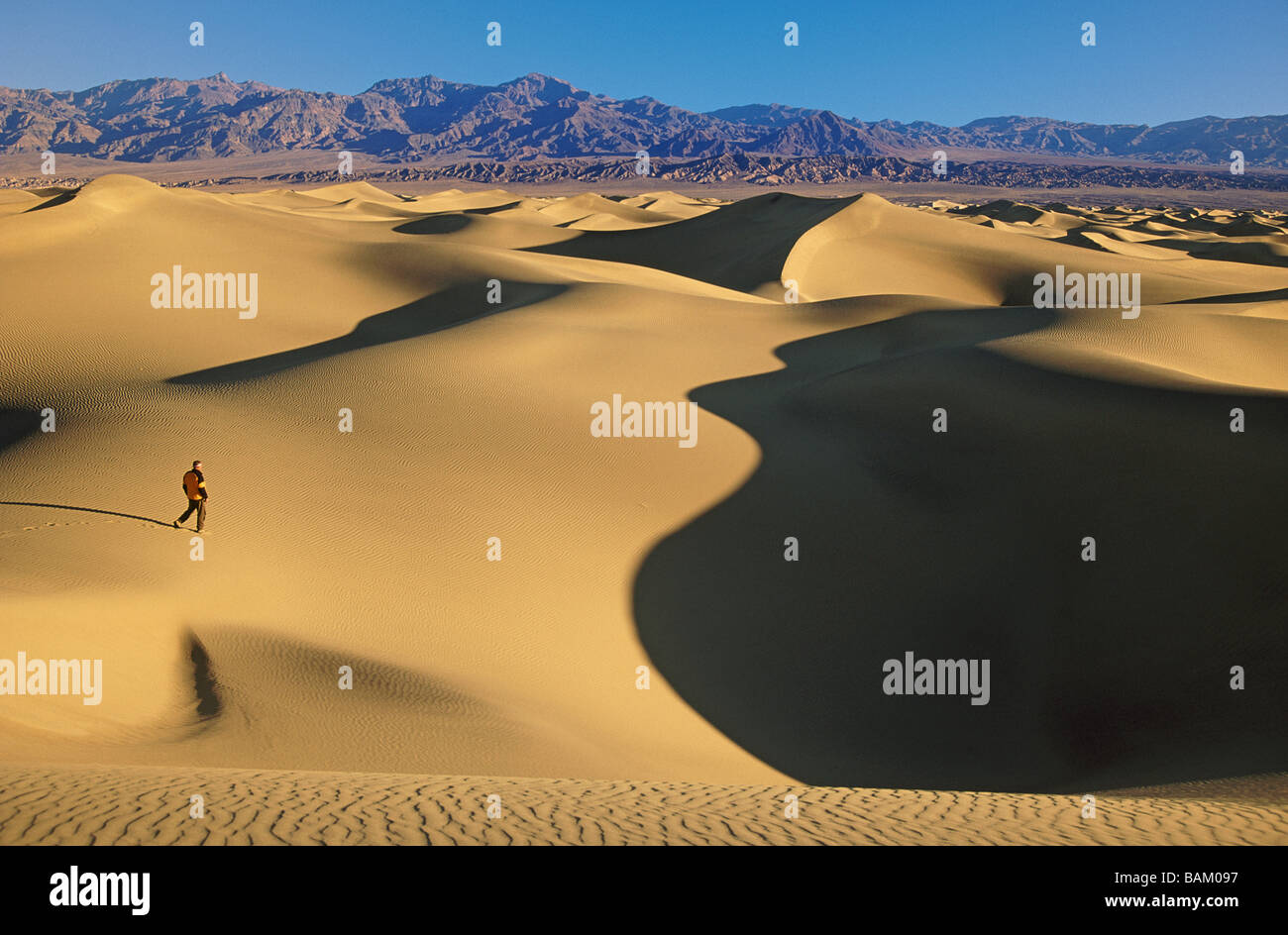 Hiker on mesquite sand dunes - Stock Image