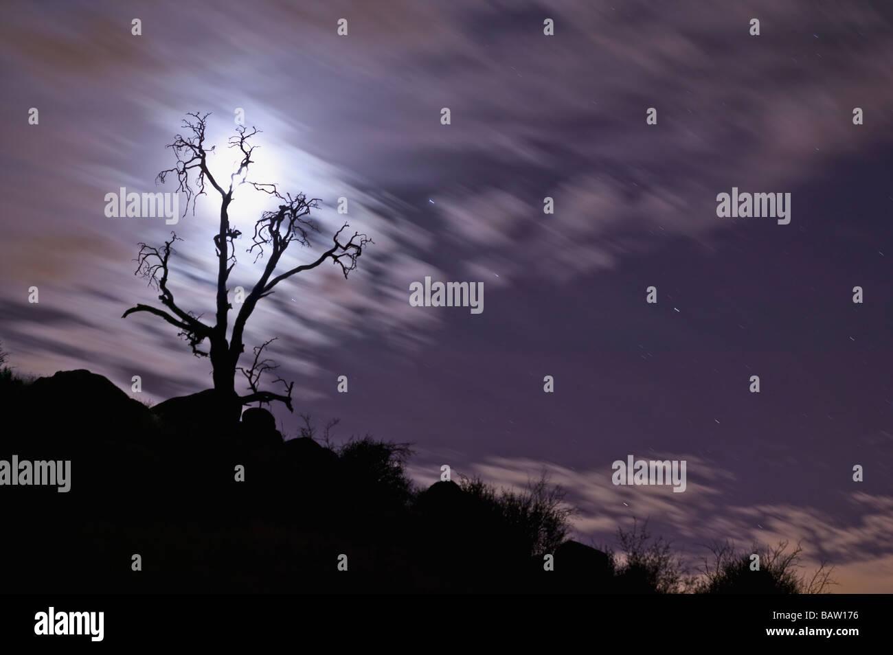 Full moon behind bare tree - Stock Image