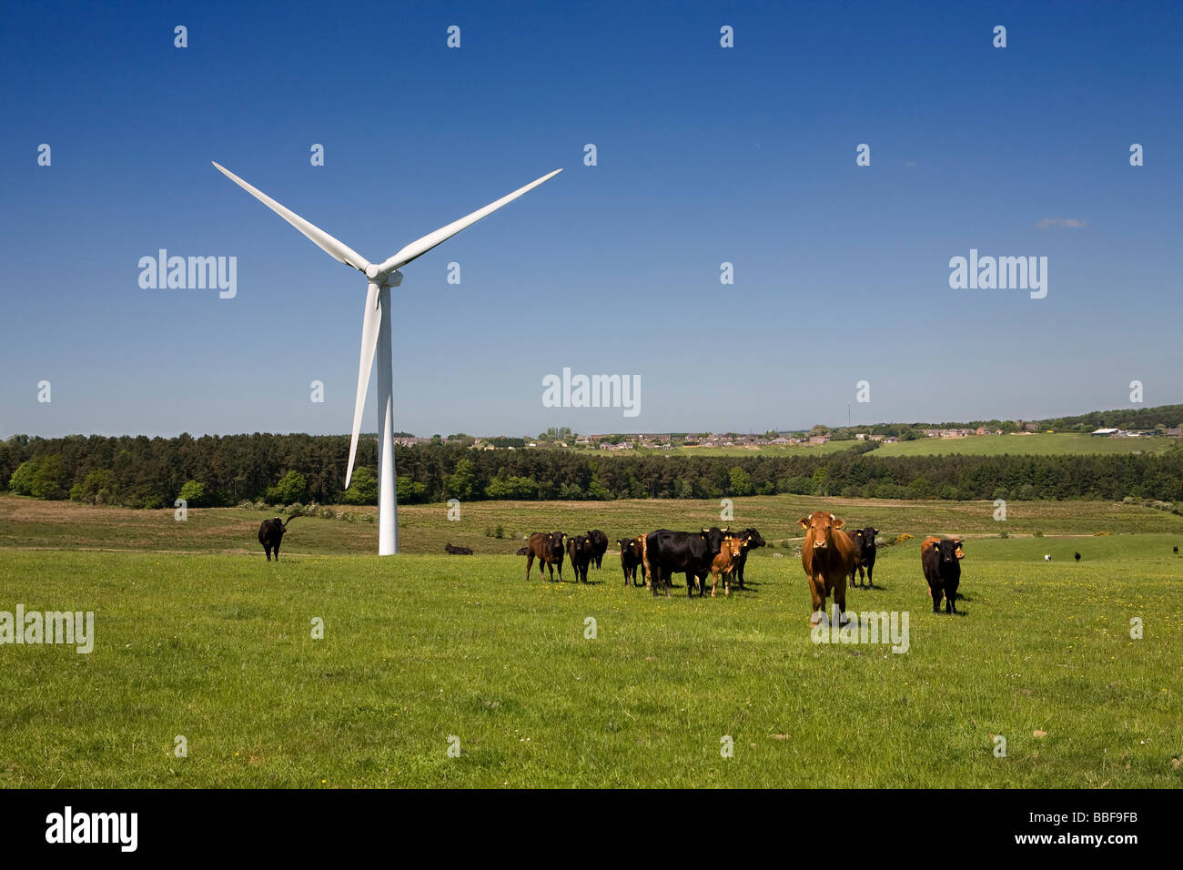 wind-turbine-on-farm-with-cattle-co-durh