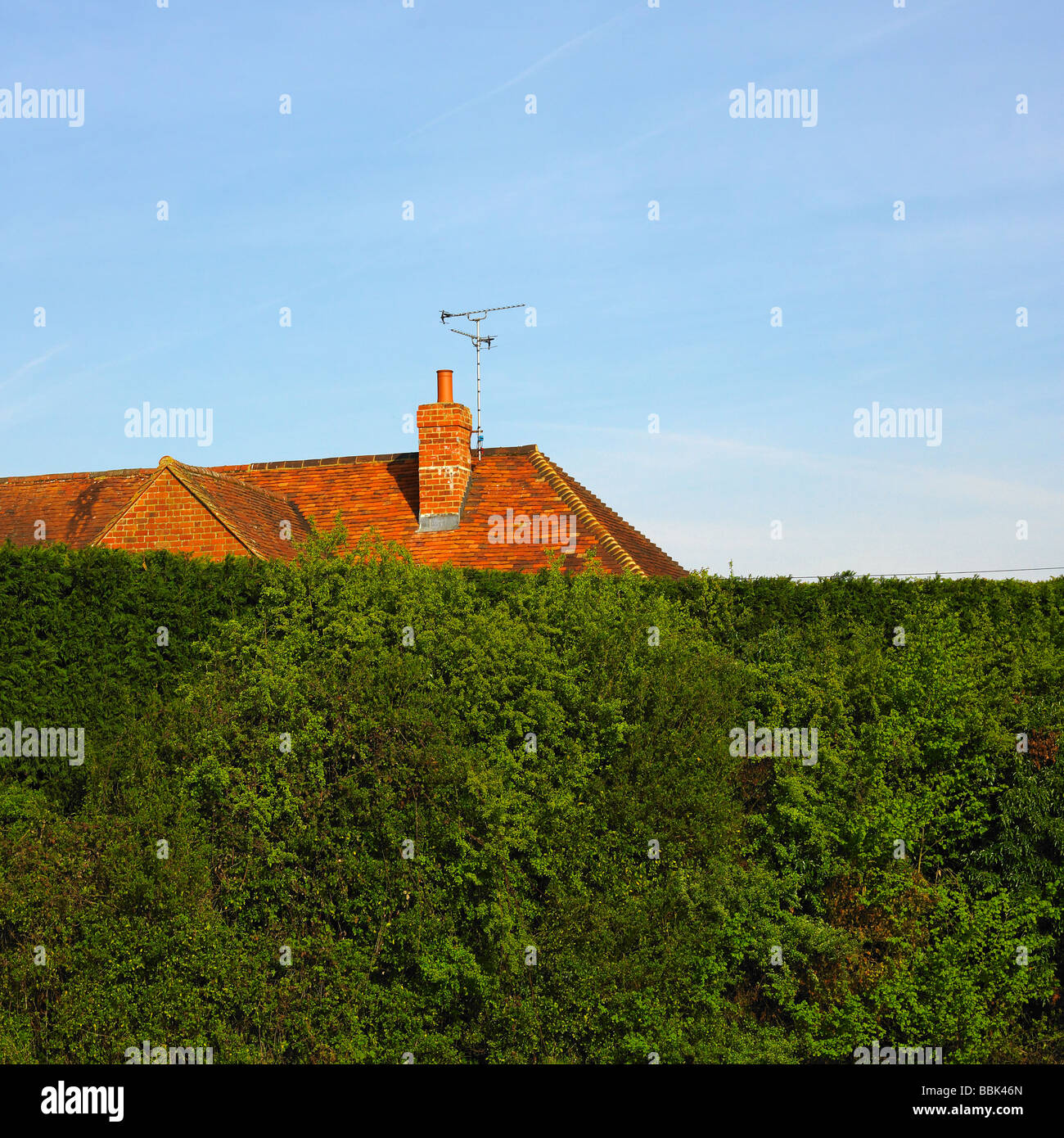 High hedge with roof top and tv aerial . - Stock Image