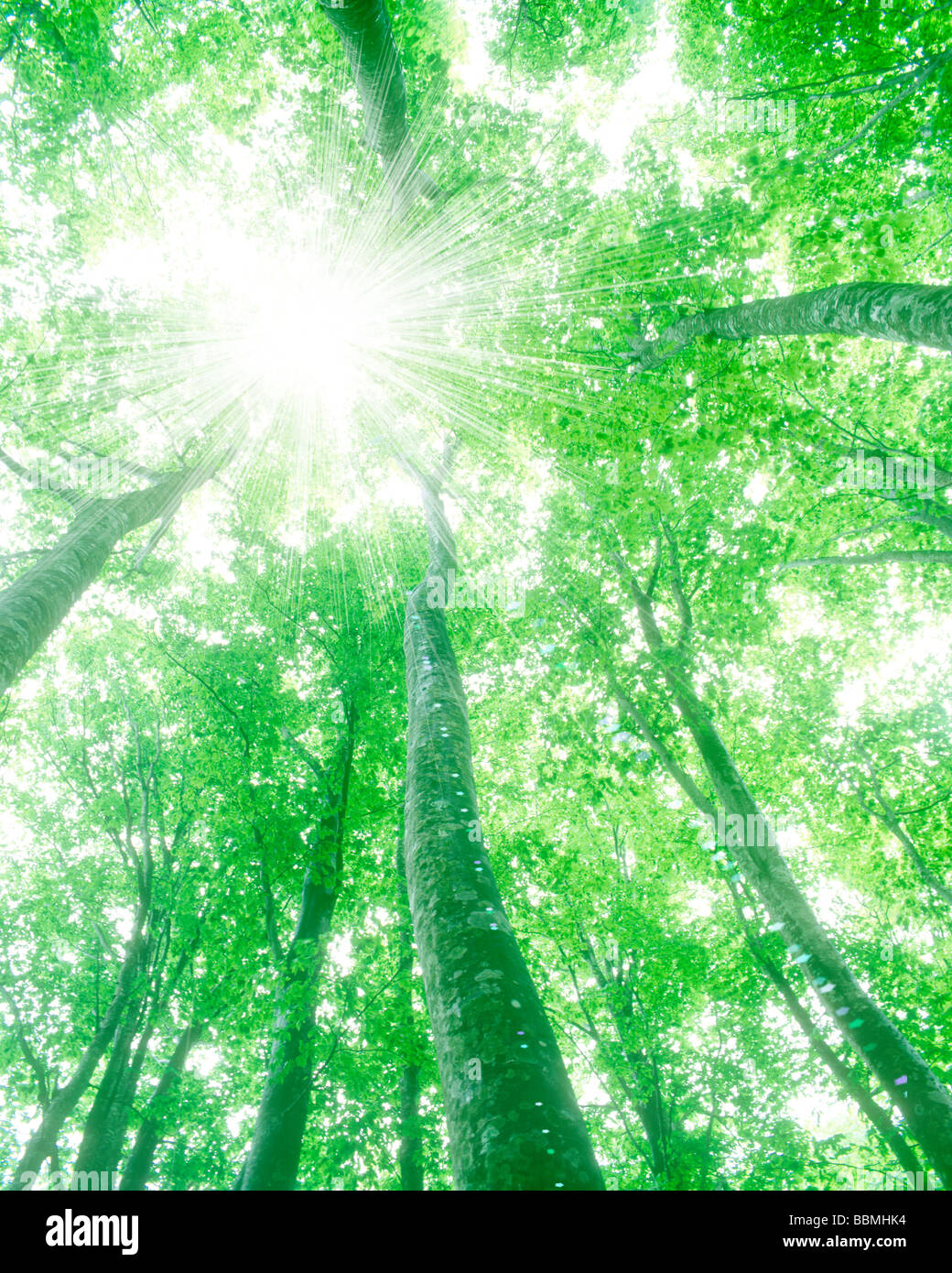 Sunshine through trees, view from below - Stock Image