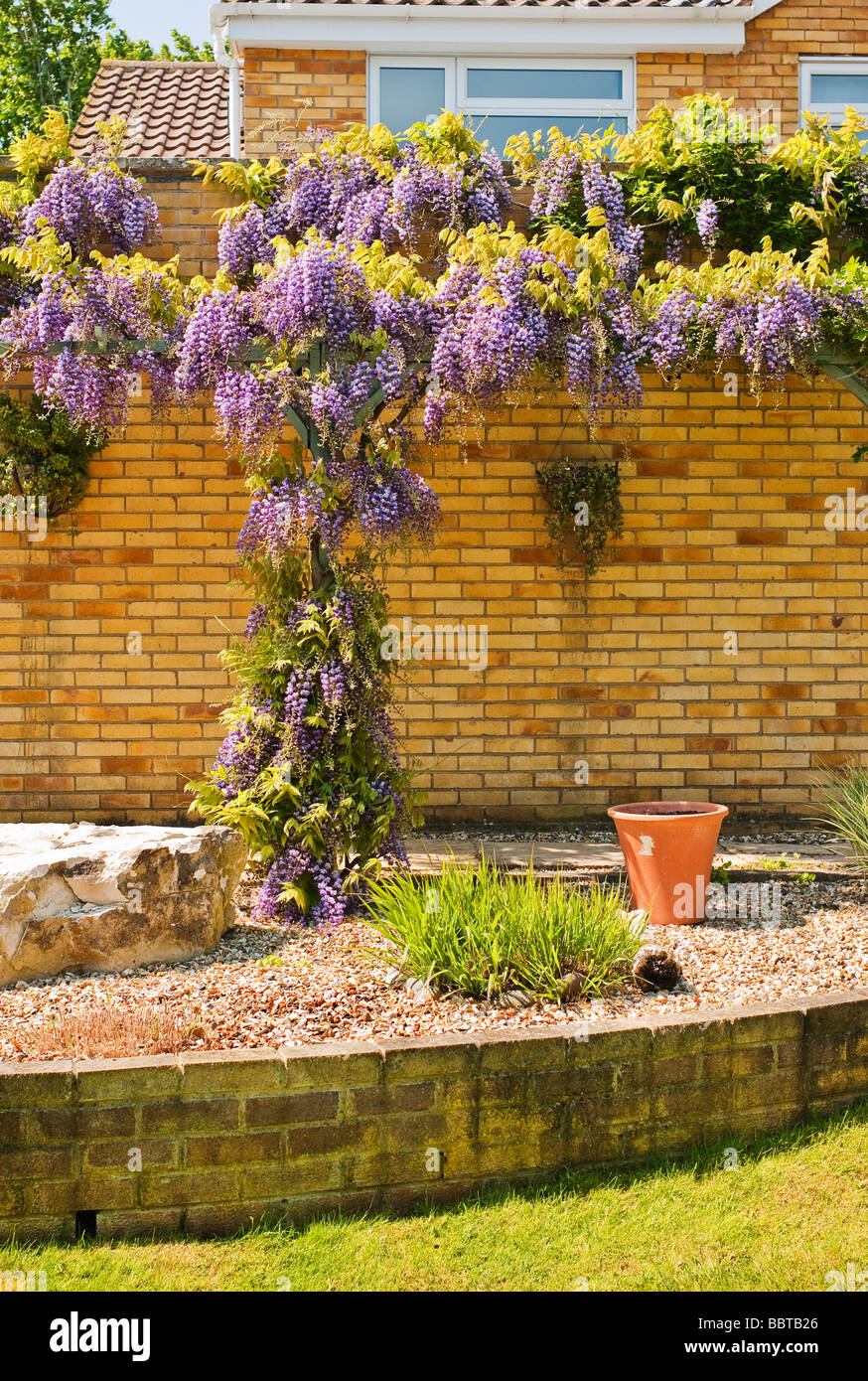 Small garden with raised area and wisteria climber in flower Stock ...