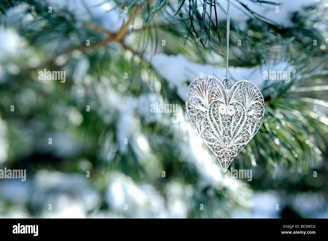 christmas-silver-heart-shaped-ornament-on-branch-of-austrian-pine-BC0WCG.jpg
