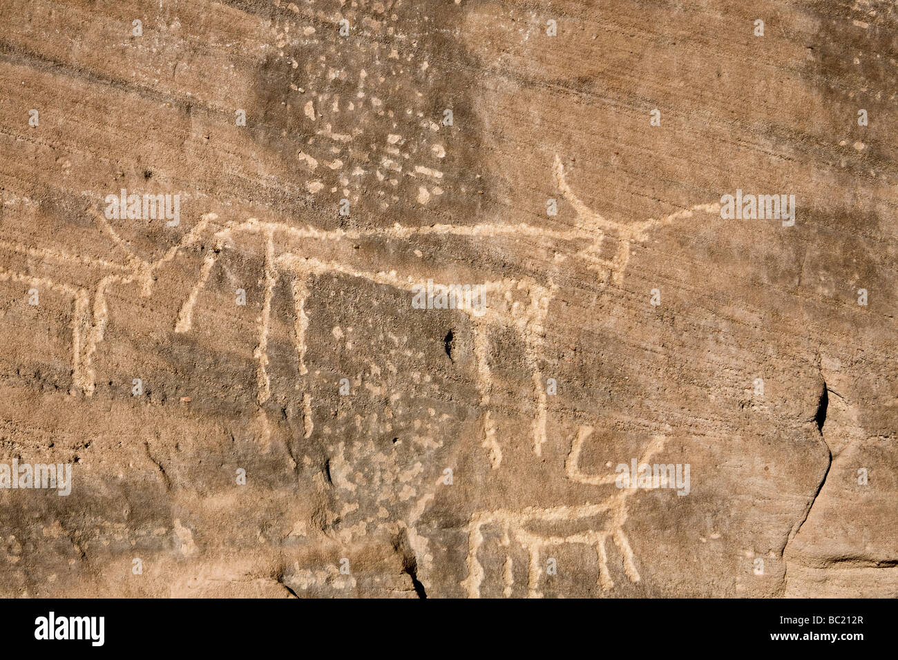Rock-art of domesticated cattle in the Eastern Desert of Egypt, North Africa - Stock Image