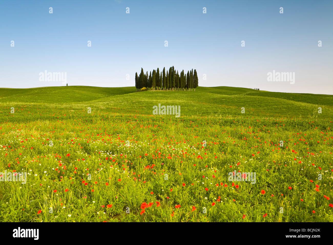 Tuscan landscape, Tuscany, Italy, RF - Stock Image