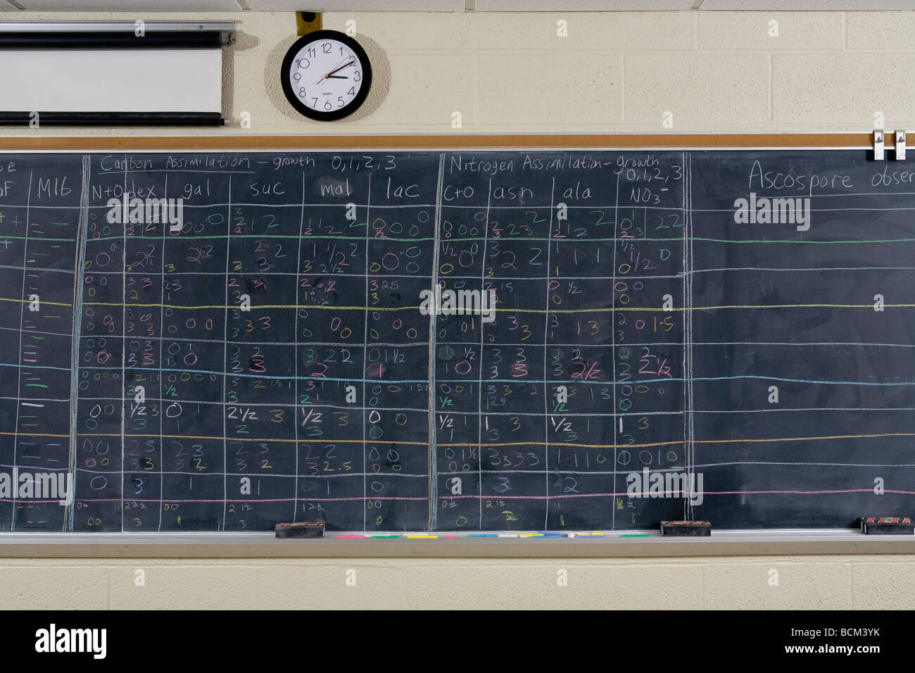 Chalkboard full of scientific equations - Stock Image
