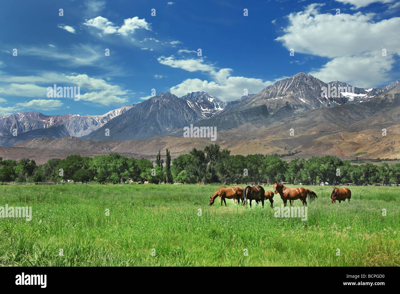 Horses Living in the Eastern Sierra Nevada Mountains - Stock Image