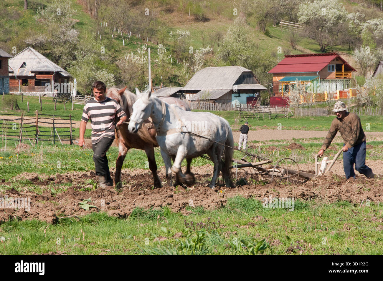 Maramures peasant father and son doing spring plowing with horse drawn plow - Stock Image