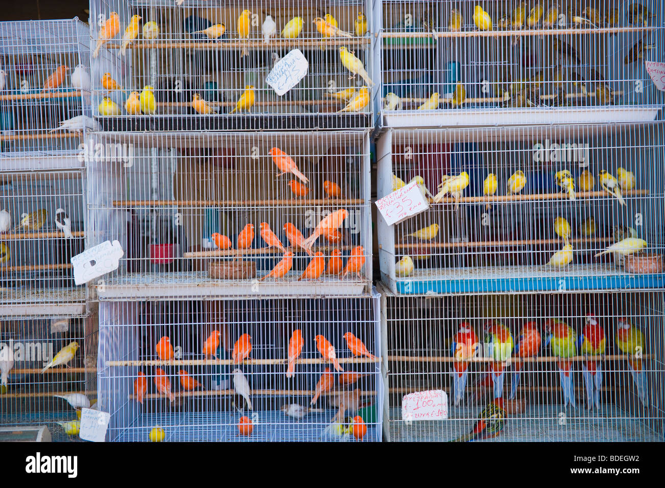 Birds For Sale >> Caged Birds For Sale At Annual Festival Market At St Gerasimos Stock