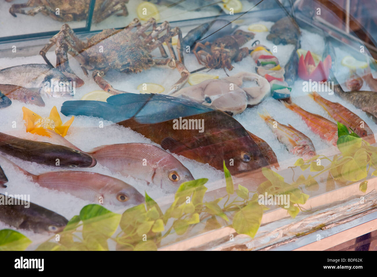9880cf0e850c Fresh fish displayed for selection by diners in chill counter outside  restaurant in Katelios on the Greek island of Kefalonia