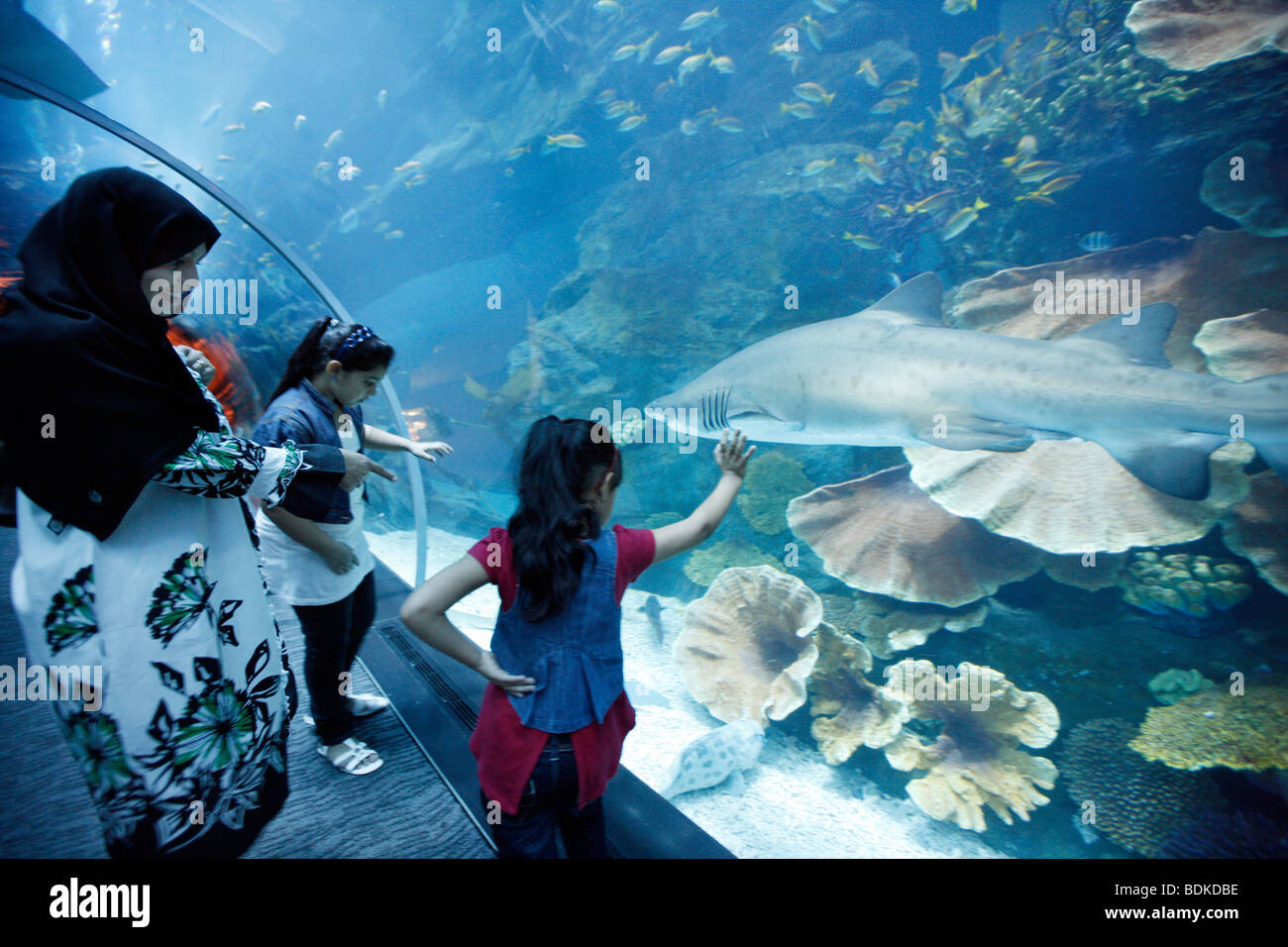Dubai Aquarium and underwater Zoo, part of Dubai Mall in Downtown Dubai, new part of the city, Dubai, United Arab Stock Photo