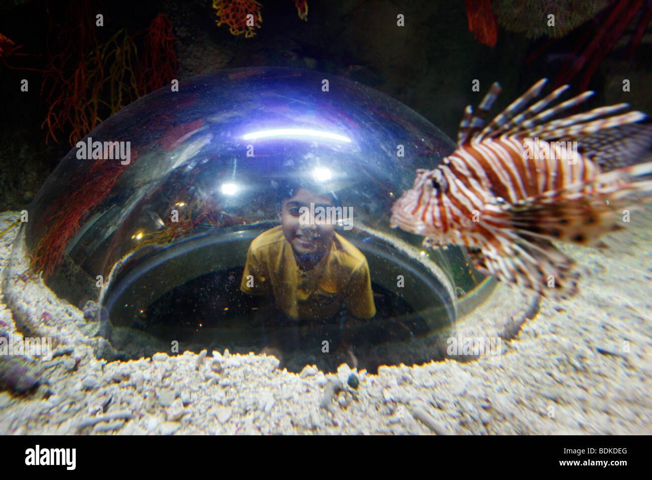Dubai Aquarium and underwater Zoo, part of Dubai Mall in Downtown Dubai, new part of the city, Dubai, United Arab - Stock Image
