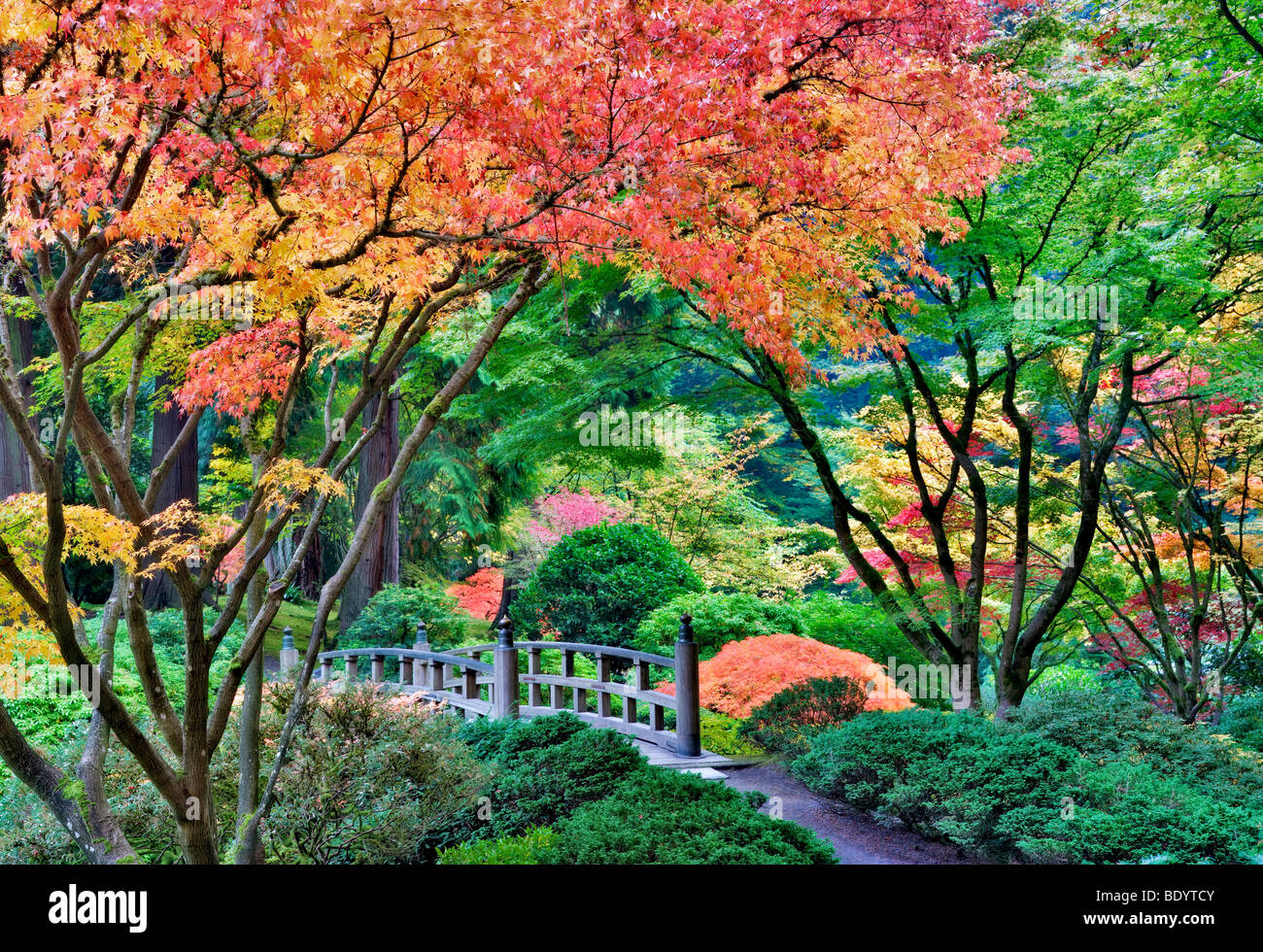 Portland Japanese Gardens with bridge and fall colors. Oregon Stock ...