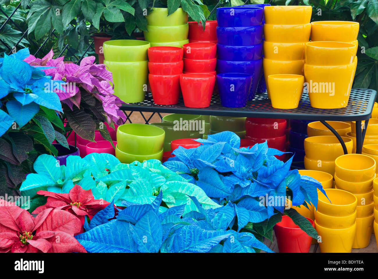 colorful pots and colored poinsettias als garden nursery sherwood oregon - Als Garden