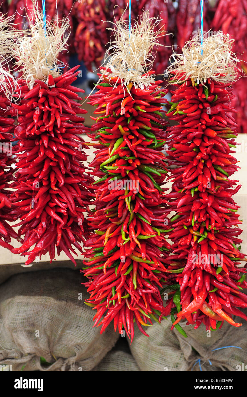 USA Hatch, New Mexico- Ristras of hot chile peppers for decoration and eating Stock Photo