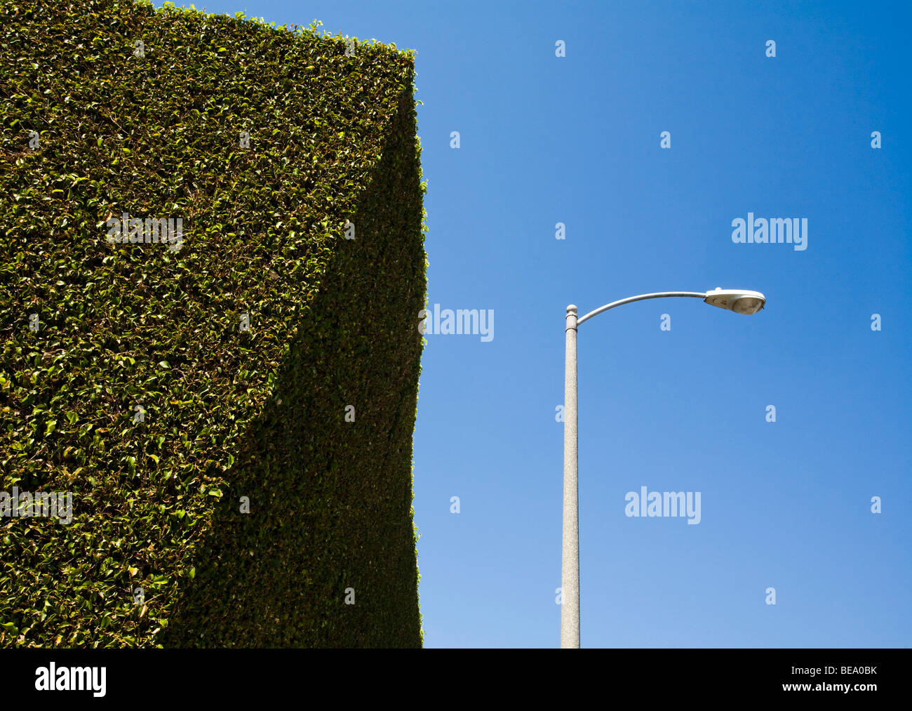 Gigantic Hedge, Los Angeles County, California, United States of America - Stock Image