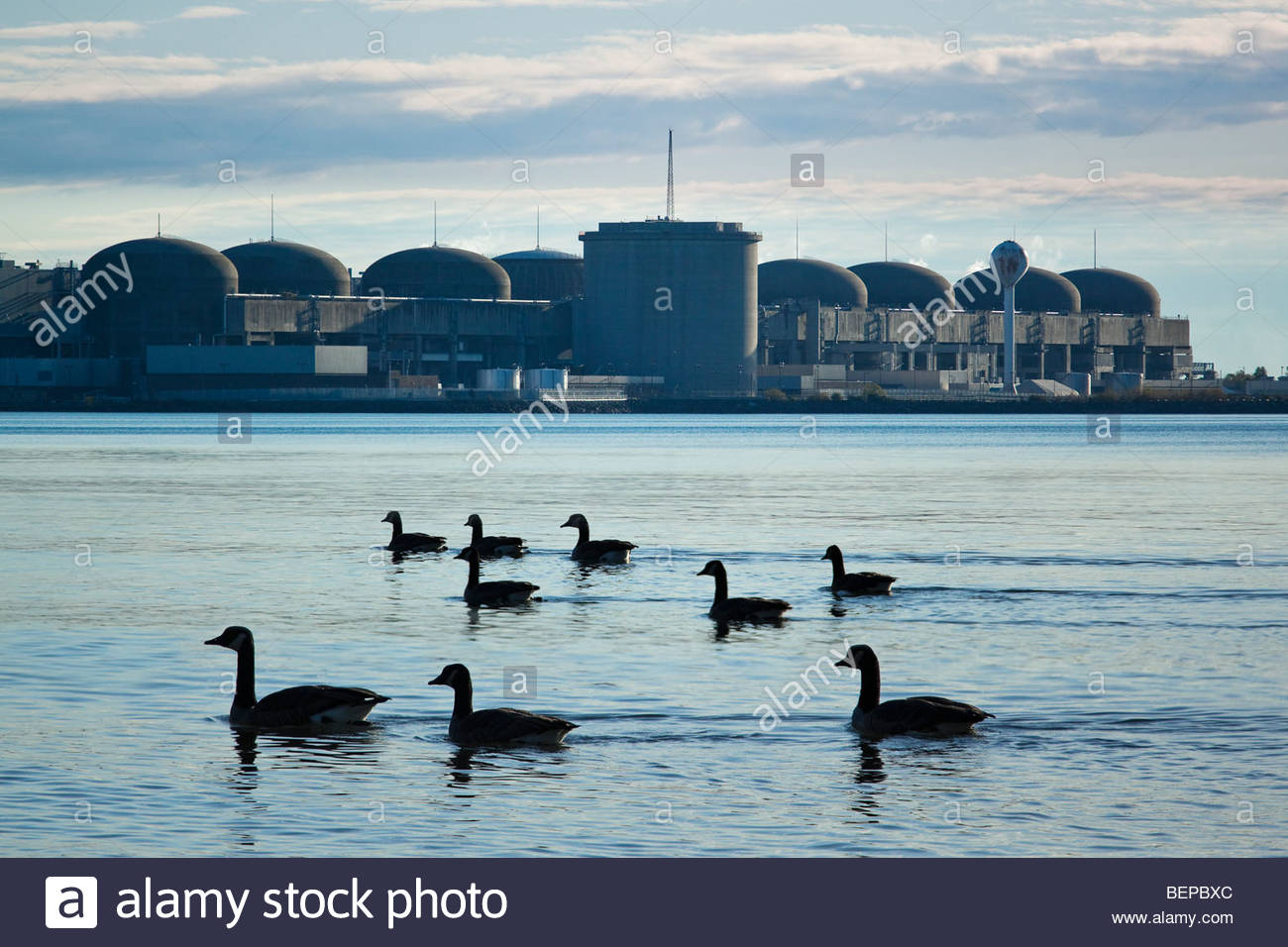 canada-geese-and-8-reactors-of-candu-nuc