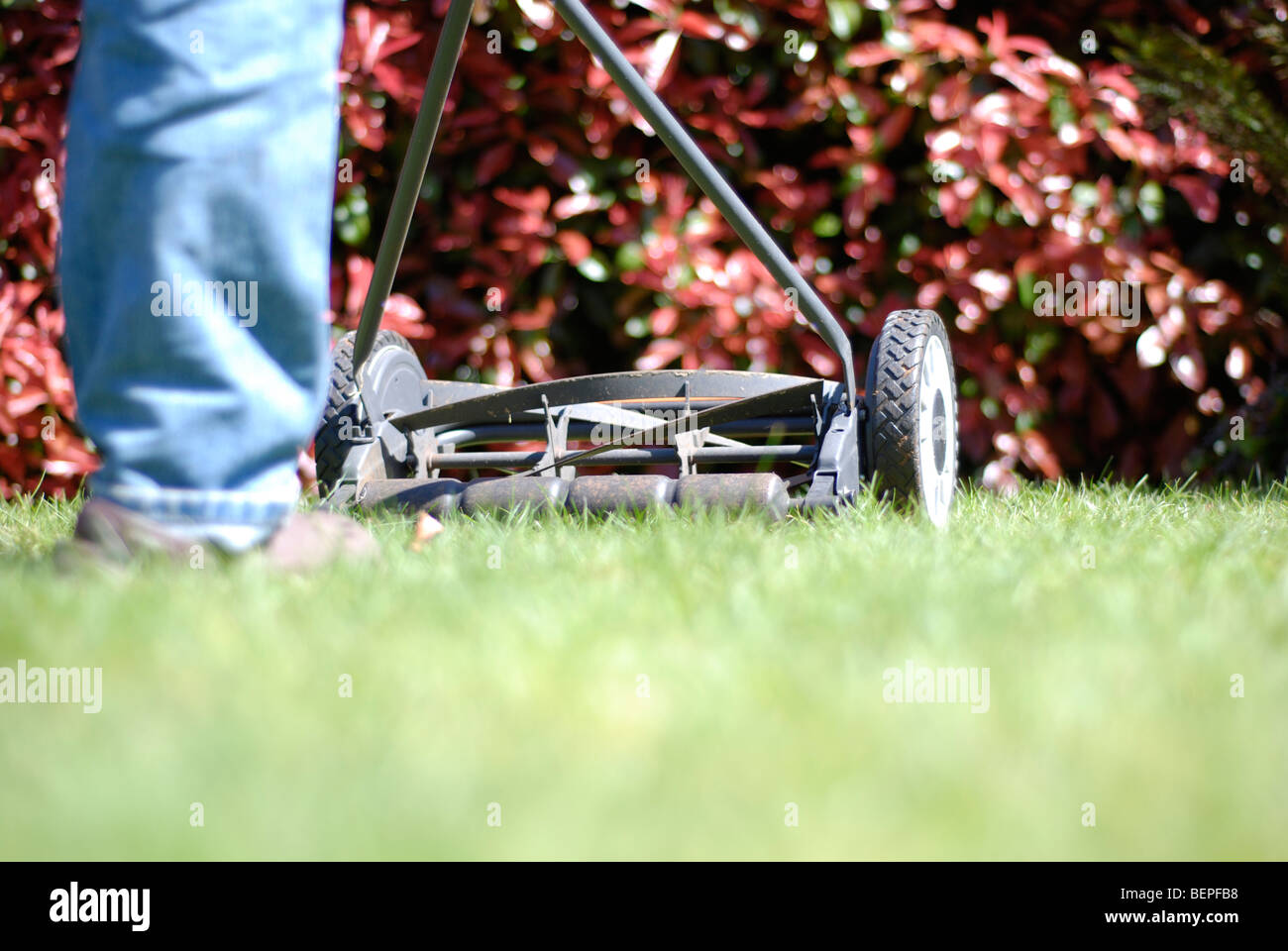 cutting-grass-with-a-push-mower-BEPFB8.j