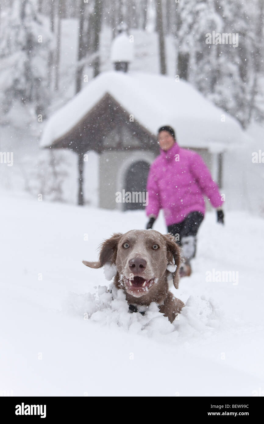 Dog peeking out of deep snow, one person in the background, Elsbethen, Salzburger Land, Austria - Stock Image