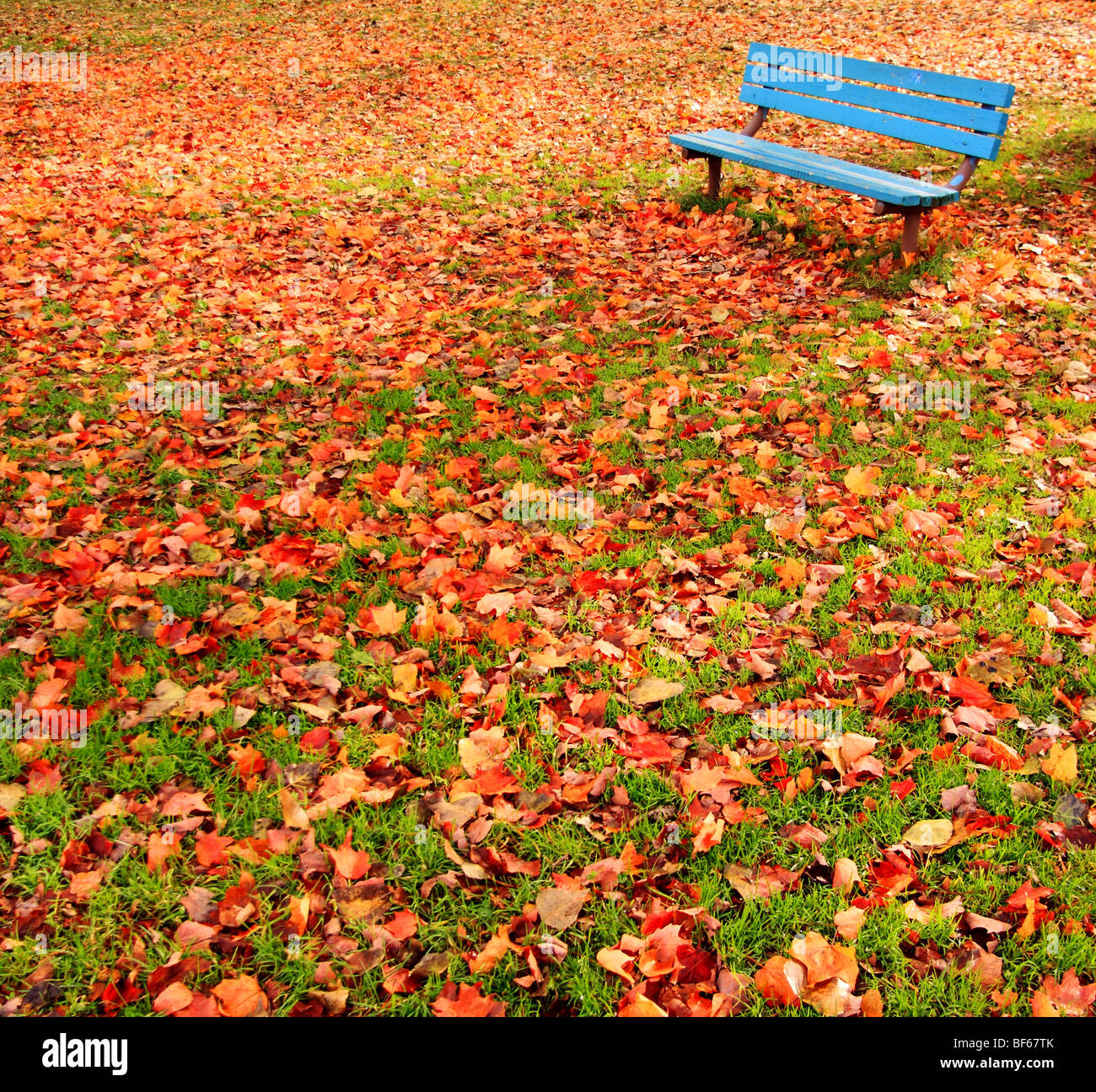 A lone, blue bench in a park surrounded by autumn leaves. - Stock Image