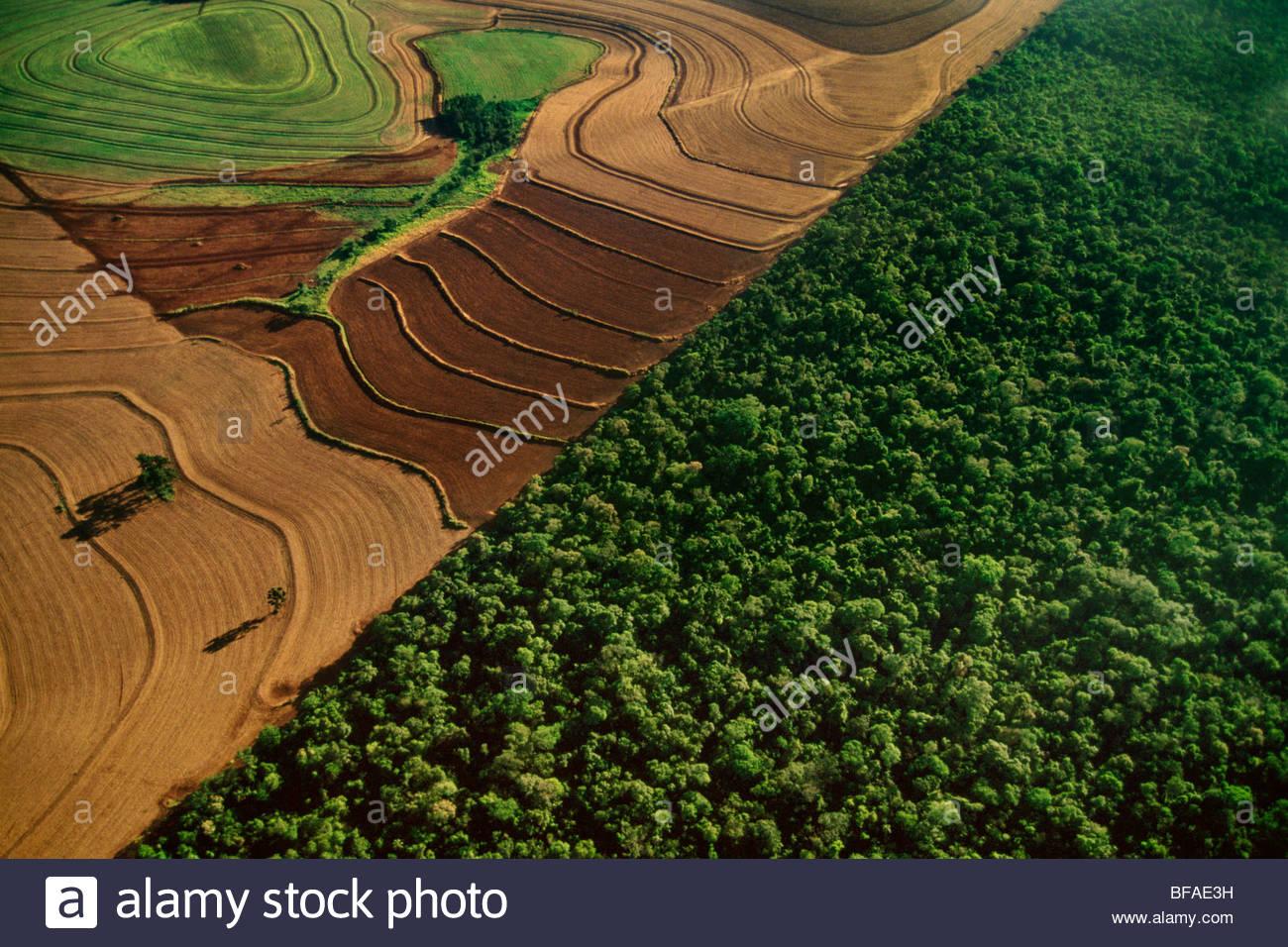Cropland bordering rainforest habitat (aerial), Iguacu National Park, Brazil - Stock Image