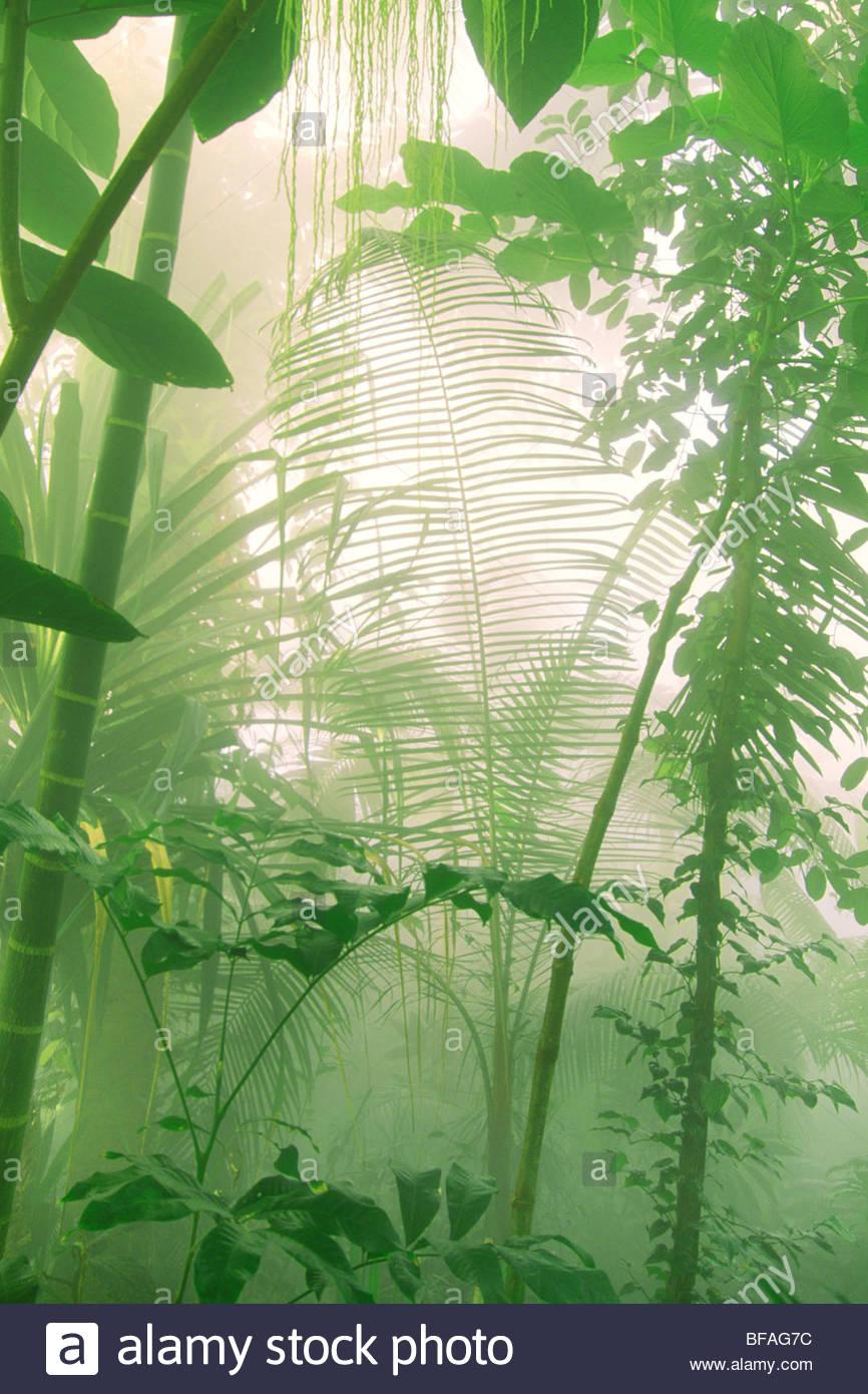 Rainforest vegetation in mist, Atlanta Botanical Garden, Atlanta - Stock Image