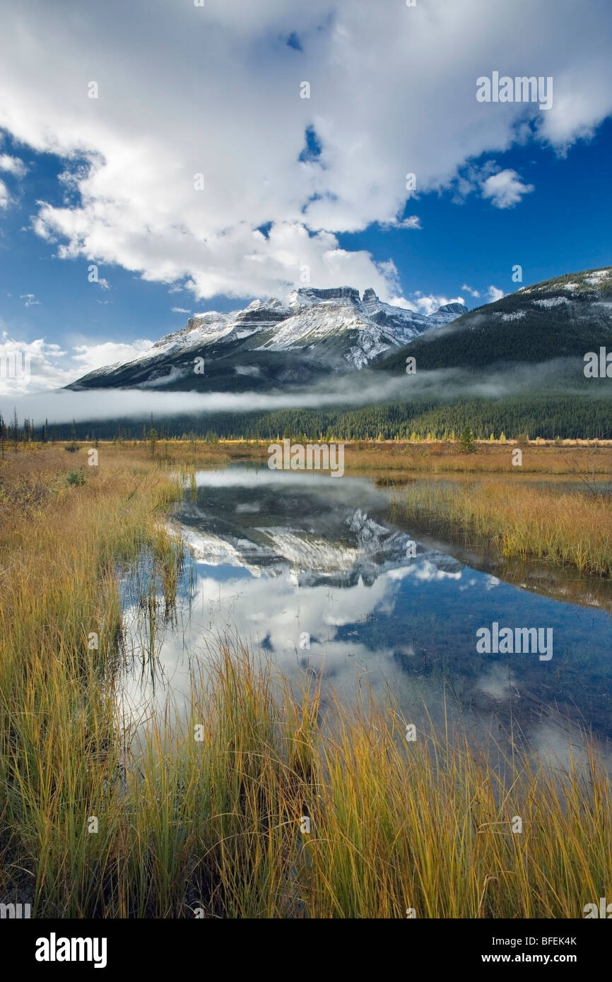 Graveyard Flats with North Saskatchewan River and Mount Amery, Banff National Park, Alberta, Canada - Stock Image
