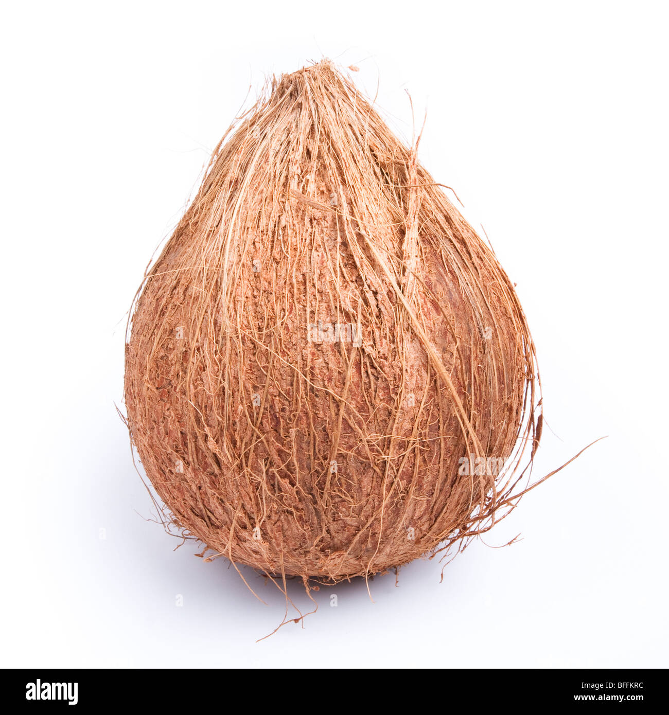 Whole hairy brown coconut isolated against white background. - Stock Image