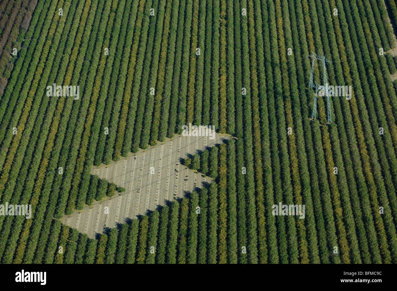 aerial view above powerlines across Central Valley California farmland - Stock Image