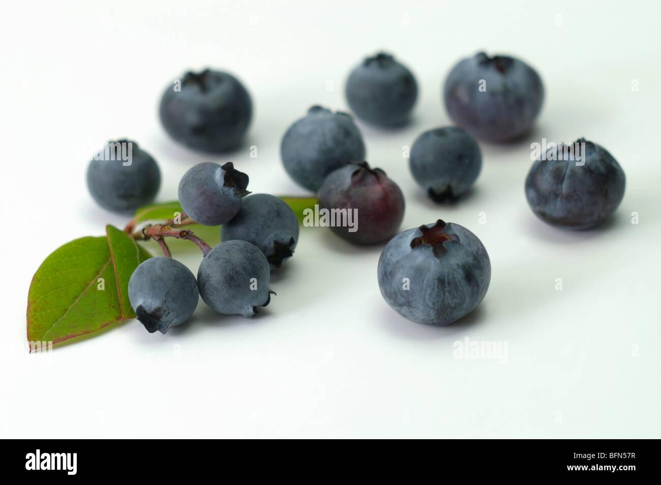 Northern Highbush Blueberry (Vaccinium corymbosum, Vaccinium angustifolium). Berries, studio picture. - Stock Image