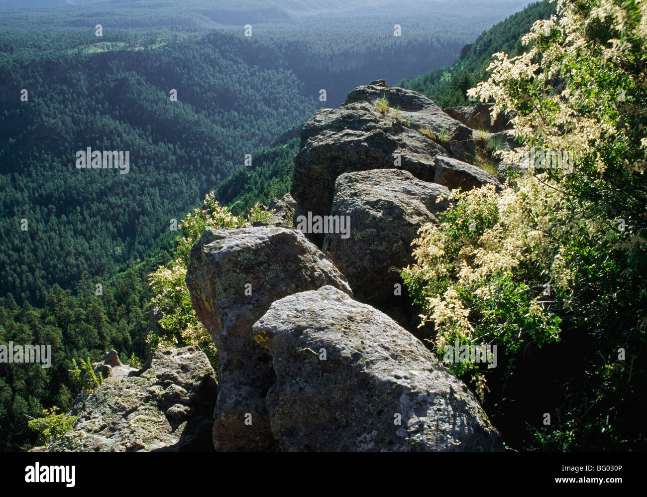 Boulders and flowering mountain spray (Holodiscus dumosus), East Fork Canyon, Jemez National Recreation Area, New - Stock Image