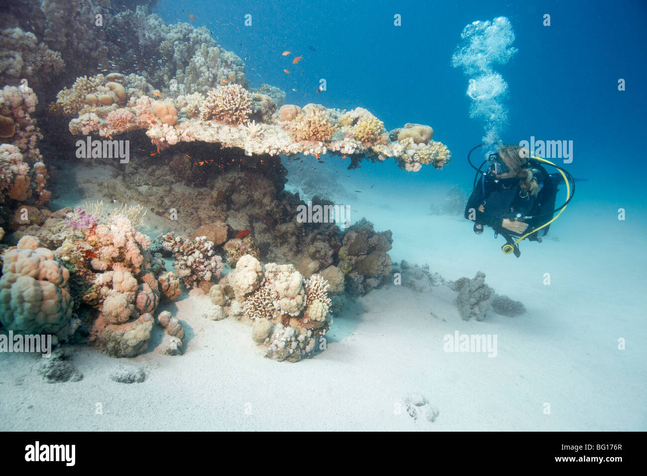 Diver beside reef - Stock Image