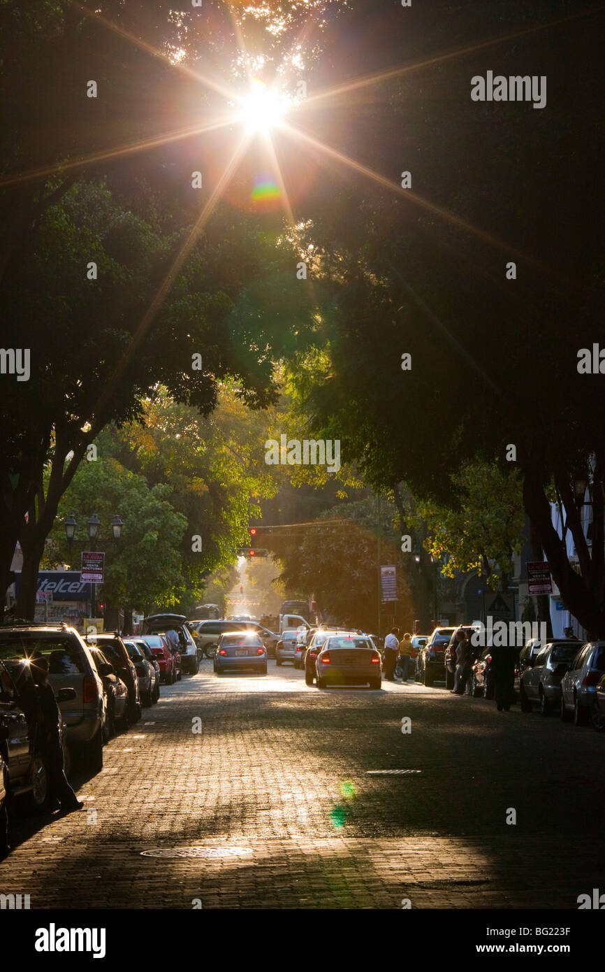 Tree lined street in the Zona Rosa in Mexico City - Stock Image
