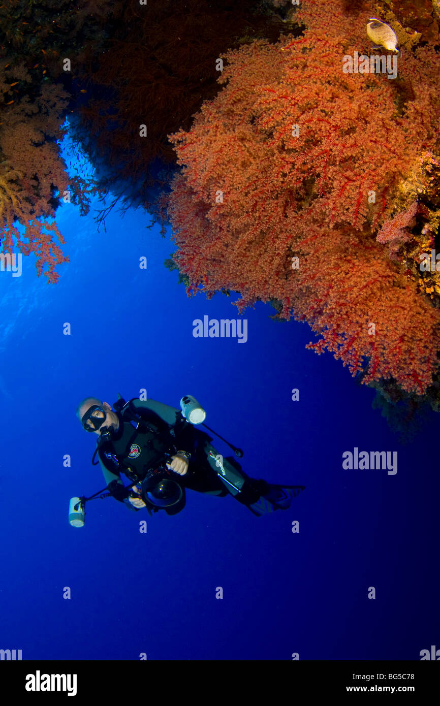 Underwater photographer scuba diving, Red sea, coral reef, tropical reef, blue water, clear water, visibility, ocean, - Stock Image